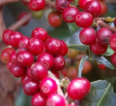 Specialty Coffees from Carmo de Minas
