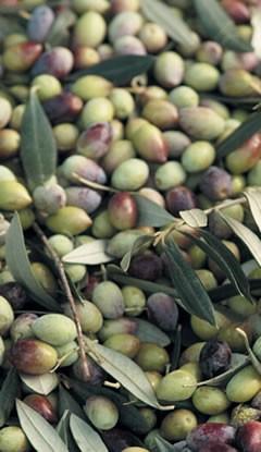 Greece - Kalamata Extra Virgin Olive Oil