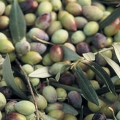Greece - Kalamata Extra Virgin Olive Oil